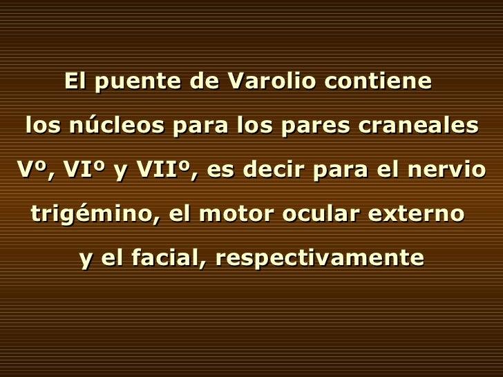 El puente de Varolio contiene  los núcleos para los pares craneales Vº, VIº y VIIº, es decir para el nervio trigémino, el ...