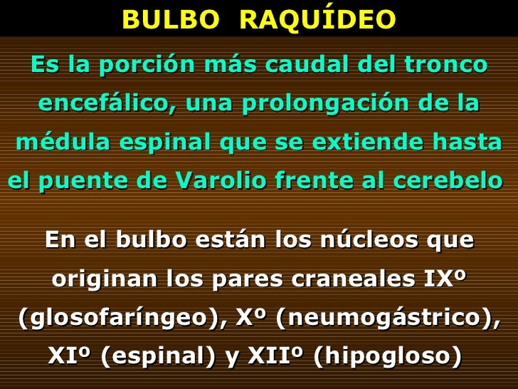 BULBO  RAQUÍDEO Es la porción más caudal del tronco encefálico, una prolongación de la médula espinal que se extiende hast...