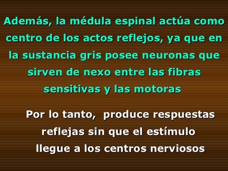 Además, la médula espinal actúa como centro de los actos reflejos, ya que en la sustancia gris posee neuronas que sirven d...