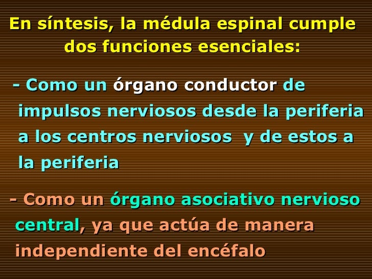 En síntesis, la médula espinal cumple dos funciones esenciales: - Como un  órgano conductor  de impulsos nerviosos desde l...