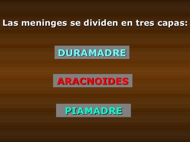 Las meninges se dividen en tres capas: DURAMADRE ARACNOIDES PIAMADRE