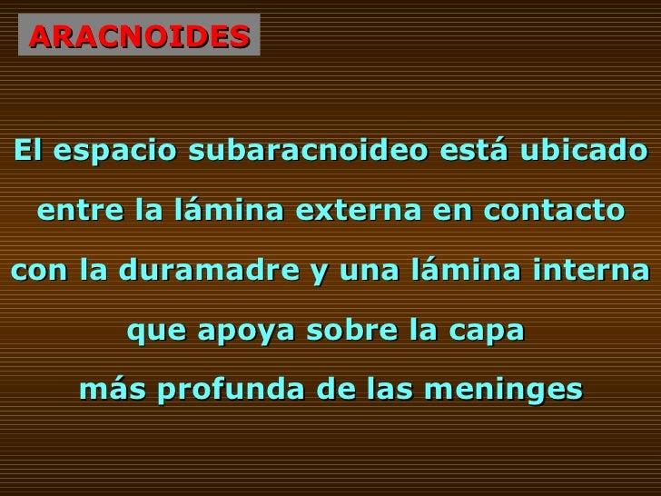 ARACNOIDES El espacio subaracnoideo está ubicado entre la lámina externa en contacto con la duramadre y una lámina interna...