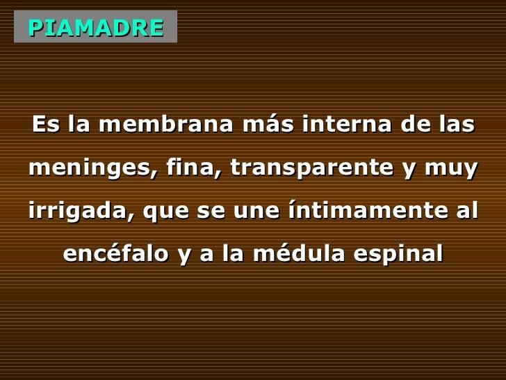 PIAMADRE Es la membrana más interna de las meninges, fina, transparente y muy irrigada, que se une íntimamente al encéfalo...
