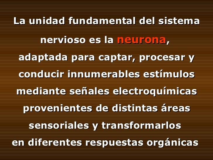 SISTEMA NERVIOSO CENTRAL Slide 3