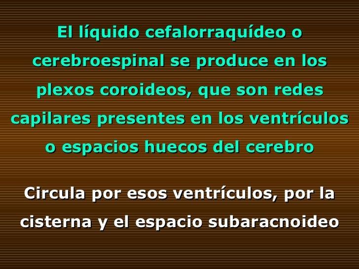 El líquido cefalorraquídeo o cerebroespinal se produce en los plexos coroideos, que son redes capilares presentes en los v...