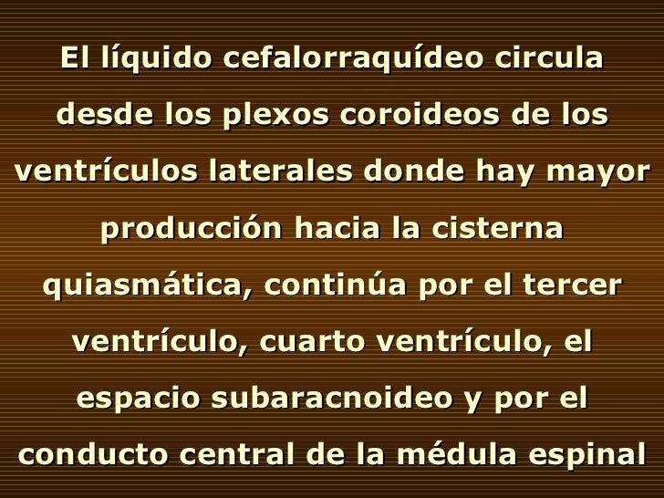 El líquido cefalorraquídeo circula desde los plexos coroideos de los ventrículos laterales donde hay mayor producción haci...