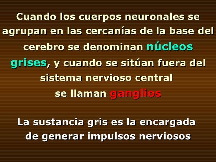 Cuando los cuerpos neuronales se agrupan en las cercanías de la base del cerebro se denominan  núcleos grises , y cuando s...