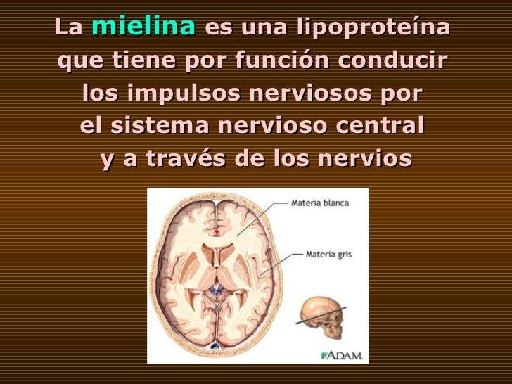 La   mielina   es una lipoproteína  que tiene por función conducir  los impulsos nerviosos por  el sistema nervioso centra...