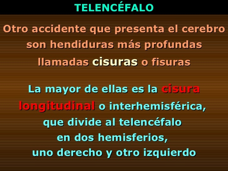 TELENCÉFALO Otro accidente que presenta el cerebro son hendiduras más profundas llamadas  cisuras  o fisuras La mayor de e...
