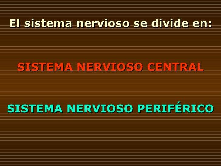 El sistema nervioso se divide en: SISTEMA NERVIOSO CENTRAL SISTEMA NERVIOSO PERIFÉRICO