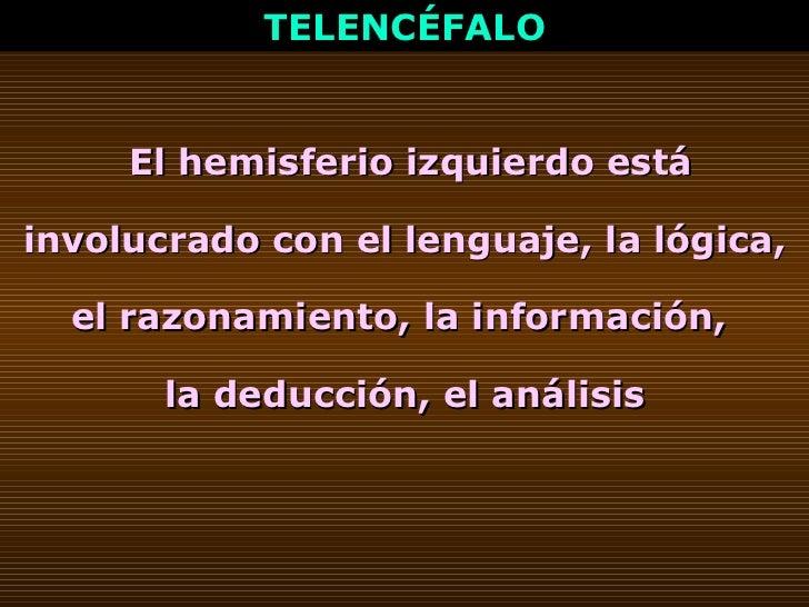 TELENCÉFALO El hemisferio izquierdo está involucrado con el lenguaje, la lógica, el razonamiento, la información,  la dedu...