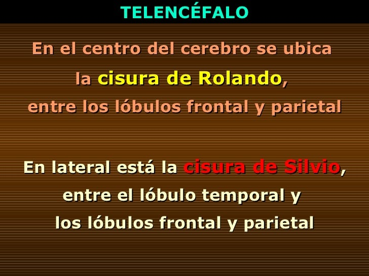 TELENCÉFALO En el centro del cerebro se ubica  la  cisura de Rolando ,  entre los lóbulos frontal y parietal En lateral es...