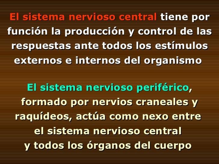 El   sistema nervioso central  tiene por función la producción y control de las respuestas ante todos los estímulos extern...