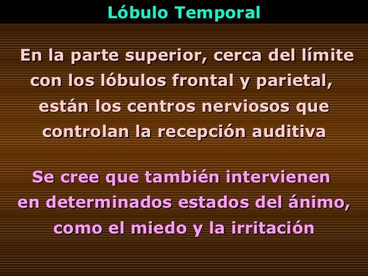 En la parte superior, cerca del límite con los lóbulos frontal y parietal,  están los centros nerviosos que controlan la r...