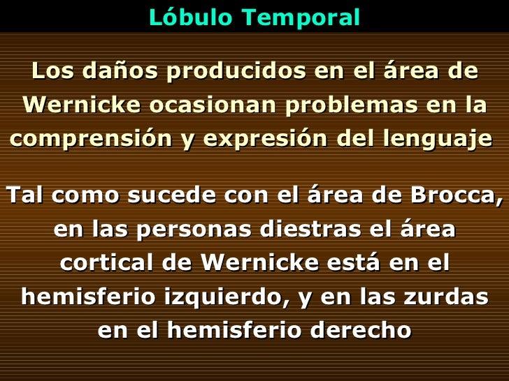 Los daños producidos en el área de Wernicke ocasionan problemas en la comprensión y expresión del lenguaje   Lóbulo Tempor...