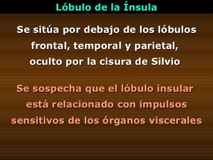 Se sitúa por debajo de los lóbulos frontal, temporal y parietal,  oculto por la cisura de Silvio  Lóbulo de la Ínsula Se s...
