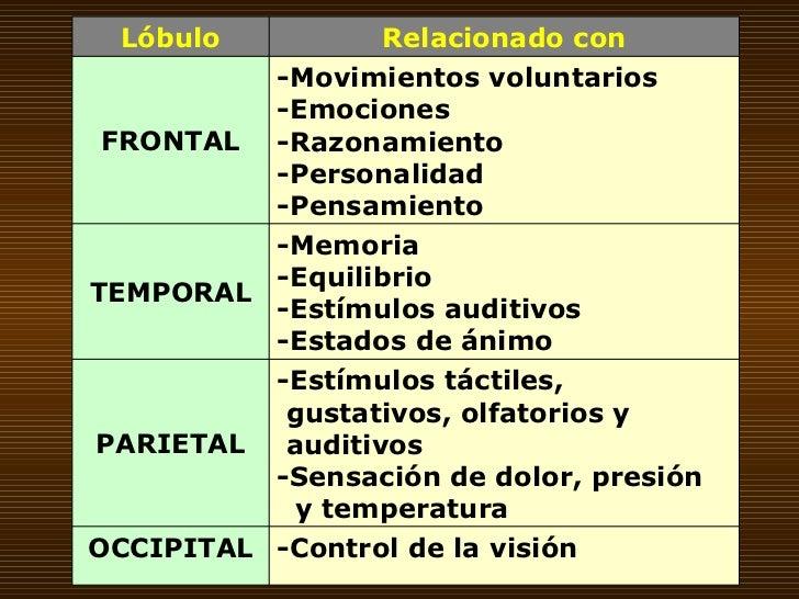 -Control de la visión OCCIPITAL -Estímulos táctiles, gustativos, olfatorios y auditivos -Sensación de dolor, presión y tem...