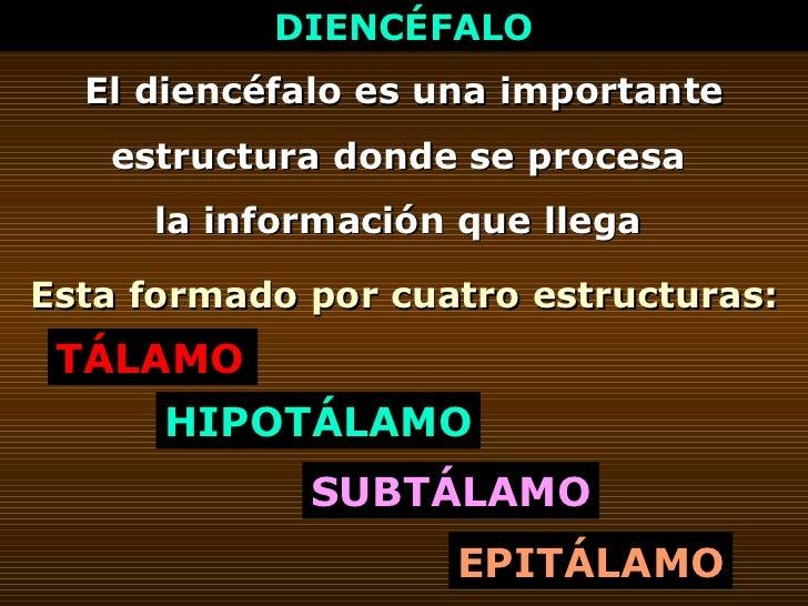 DIENCÉFALO El diencéfalo es una importante estructura donde se procesa  la información que llega  Esta formado por cuatro ...