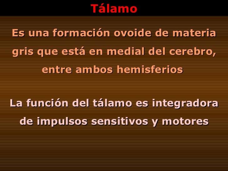 Tálamo Es una formación ovoide de materia gris que está en medial del cerebro, entre ambos hemisferios   La función del tá...