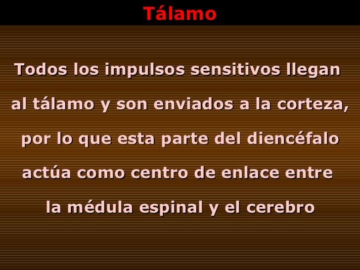 Tálamo Todos los impulsos sensitivos llegan  al tálamo y son enviados a la corteza, por lo que esta parte del diencéfalo a...