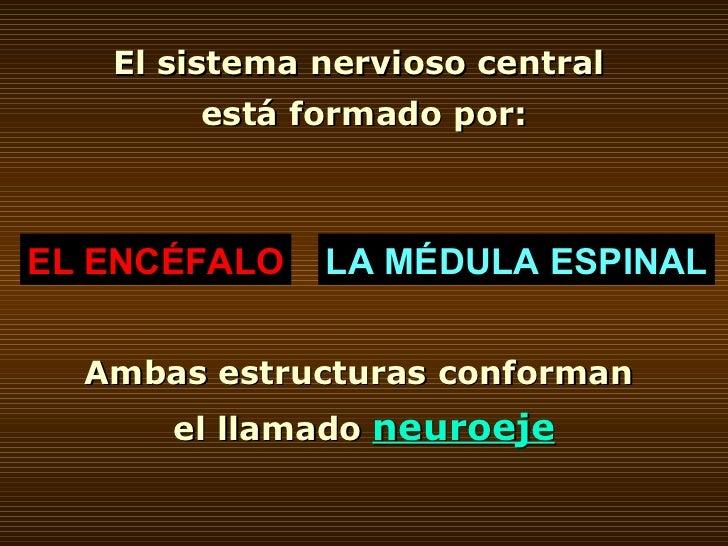 El sistema nervioso central  está formado por: EL ENCÉFALO LA MÉDULA ESPINAL Ambas estructuras conforman  el llamado  neur...