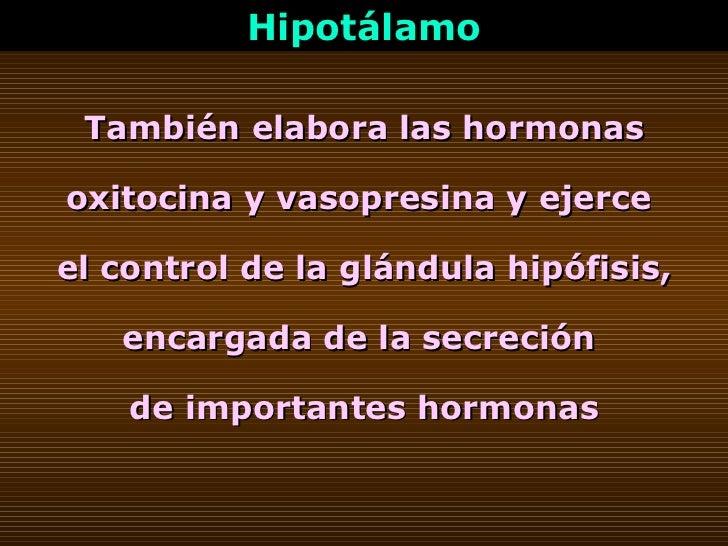 Hipotálamo También elabora las hormonas oxitocina y vasopresina y ejerce  el control de la glándula hipófisis, encargada d...