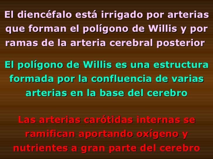 El diencéfalo está irrigado por arterias que forman el polígono de Willis y por ramas de la arteria cerebral posterior   E...