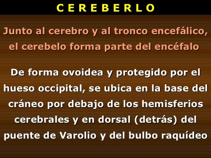 C E R E B E R L O Junto al cerebro y al tronco encefálico, el cerebelo forma parte del encéfalo  De forma ovoidea y proteg...