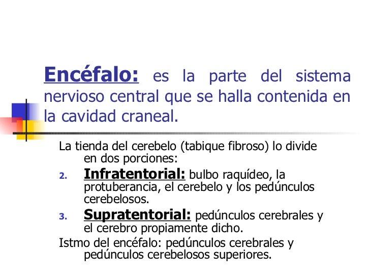 Encéfalo:  es la parte del sistema nervioso central que se halla contenida en la cavidad craneal. <ul><li>La tienda del ce...