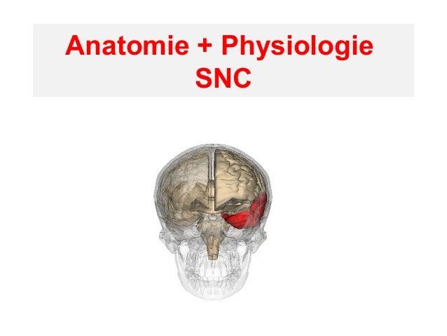Anatomie + Physiologie SNC
