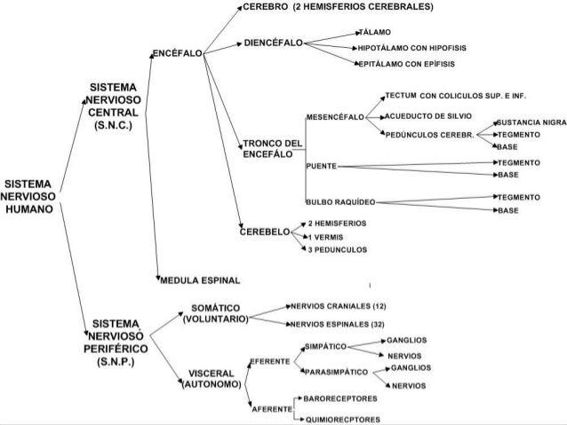 Fisiología del Sistema Nervioso Central