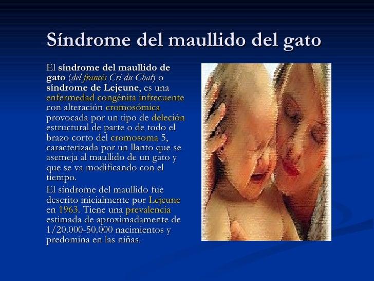 Síndrome del maullido del gato El  síndrome del maullido de gato  ( del  francés  Cri du Chat ) o  síndrome de Lejeune , e...