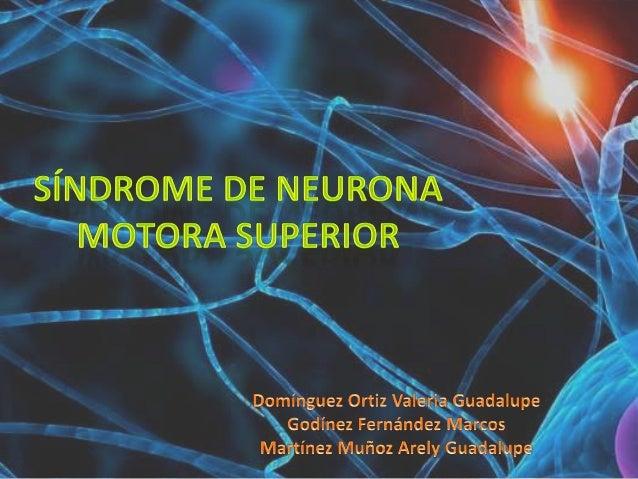 • El SNMS es el conjunto signos y síntomas o deelementos semiológicos causados por laalteración de la vía que sigue la NMS...