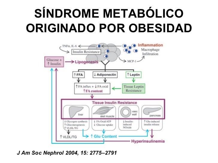 alimentos ricos en acido urico pdf alimentos ricos en vitamina b12 e acido folico dieta para bajar el acido urico en sangre