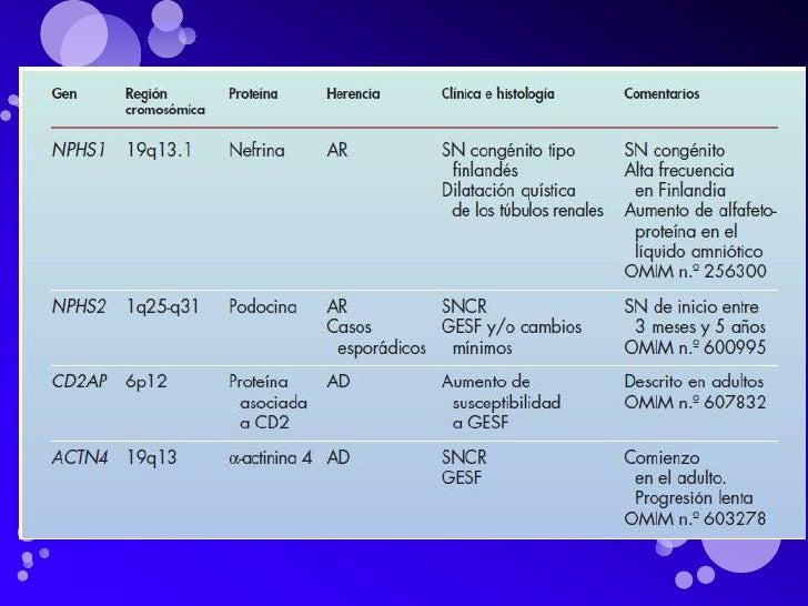 Molécula de                nefrina            CD2APFilamentos deactina                              Podocina              ...