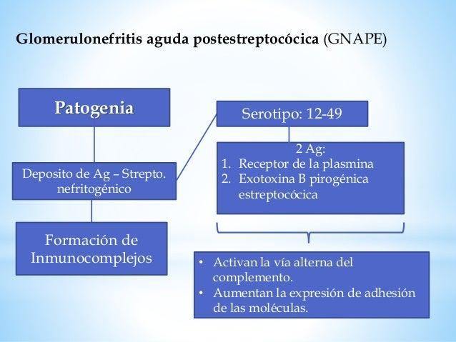 Glomerulonefritis aguda postestreptocócica (GNAPE) Diagnóstico Antecedente de infección por EGA en la faringe 1-3 semanas ...