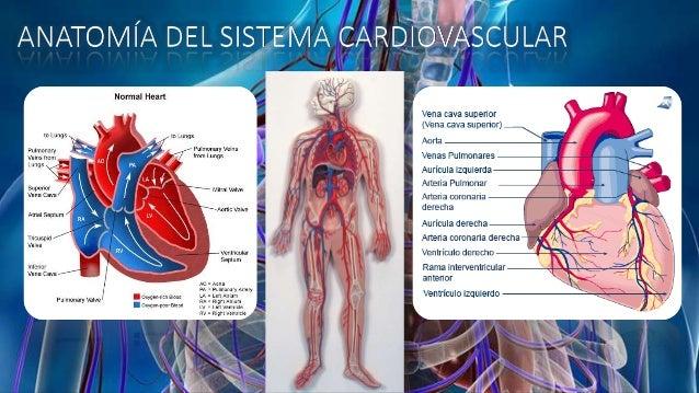 Síndromes del sistema cardiovascular