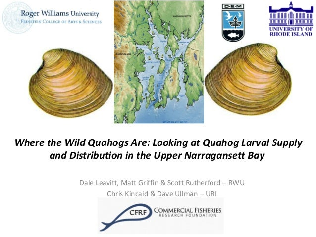 Where the Wild Quahogs Are: Looking at Quahog Larval Supply and Distribution in the Upper Narragansett Bay Dale Leavitt, M...