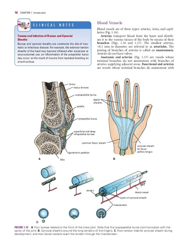 Snell Clinical Anatomy By Regions 9th