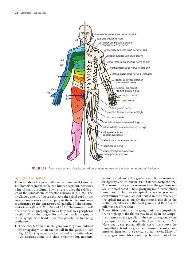 Clinical Anatomy By Snell 6636812 Togelmayafo