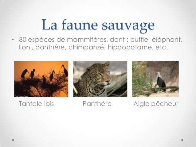 La faune sauvage• 80 espèces de mammifères, dont : buffle, éléphant,lion , panthère, chimpanzé, hippopotame, etc.Tantale i...