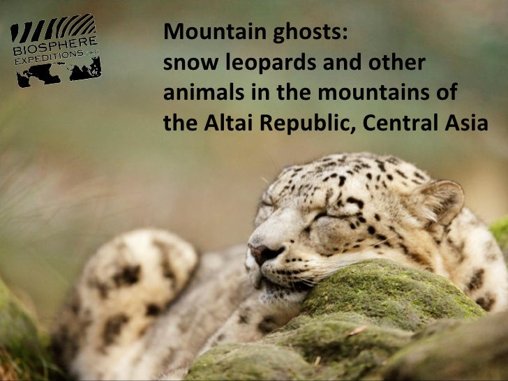 Mountain ghosts:snow leopards and otheranimals in the mountains ofthe Altai Republic, Central Asia
