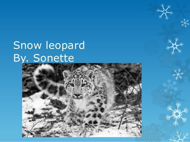 Snow leopardBy. Sonette