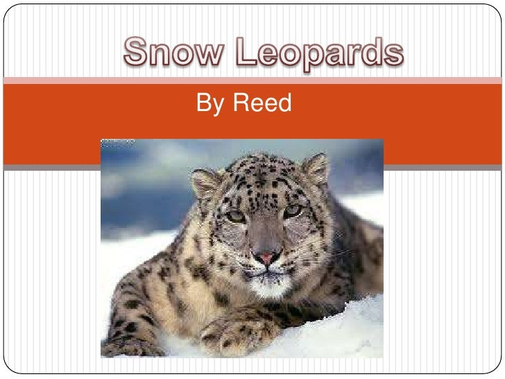 Snow Leopards<br />By Reed <br />