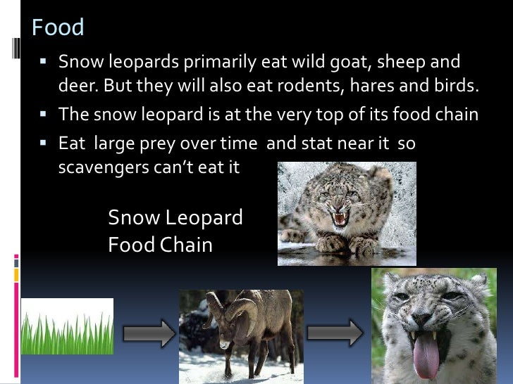 What Food Do Snow Leopards Eat