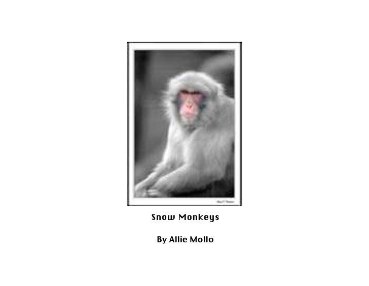 Snow Monkeys   By Allie Mollo