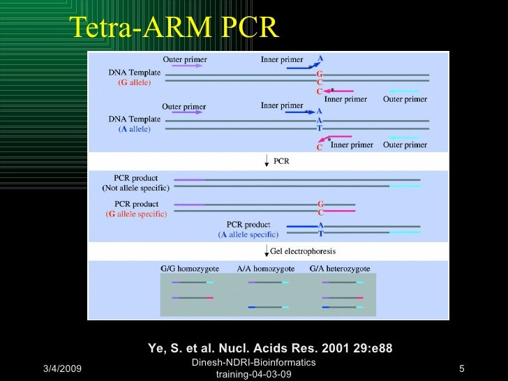 Tetra Arm Pcr