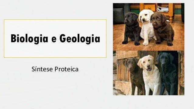 Biologia e Geologia Síntese Proteica