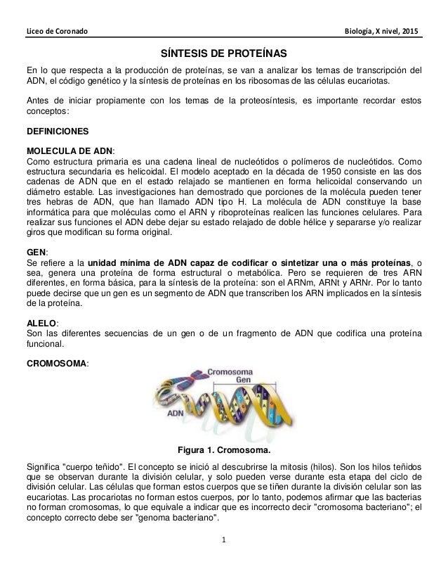 Liceo de Coronado Biología, X nivel, 2015 1 SÍNTESIS DE PROTEÍNAS En lo que respecta a la producción de proteínas, se van ...