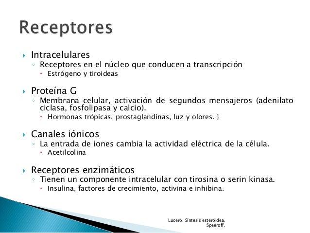 sintesis esteroidea